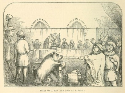 trial of sow and pigs