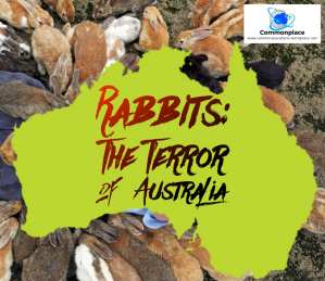 #Australia #rabbits #animals