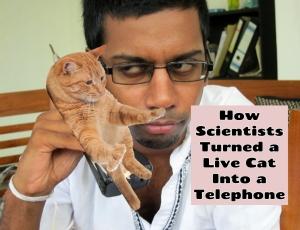 Live Cat Telephone
