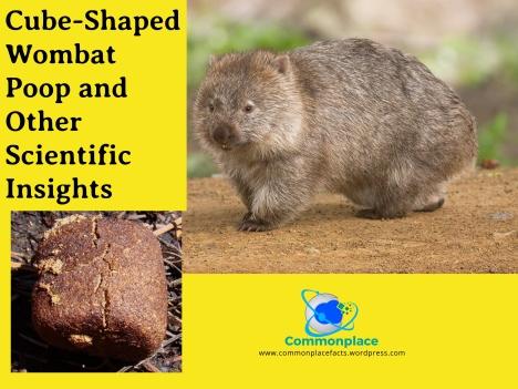 #wombats #poop #wombatpoop #igNobel