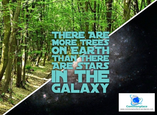 #trees #nature #stars #astronomy