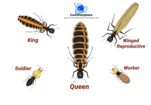 #termites #insects #castes