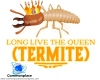#termites #insects