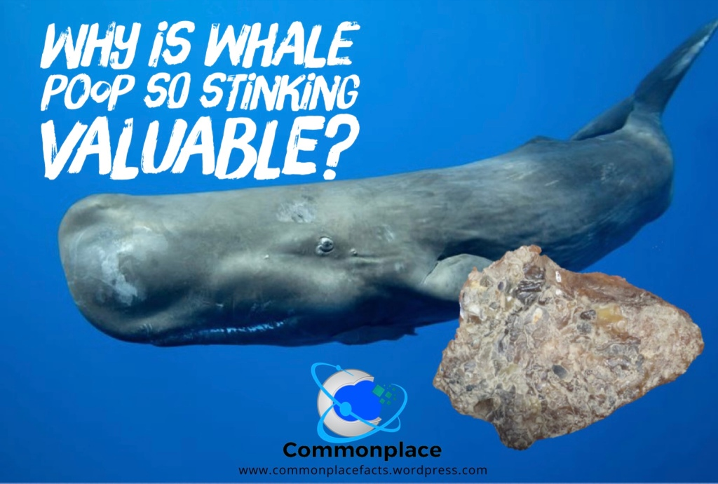 Ambergris why is the poop of a sperm whale so valuable?