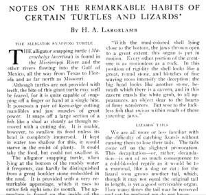 H.A. Largelamb aka Alexander Graham Bell article National Geogrhaphic