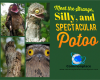 Meet the strange, silly, and spectacular potoo