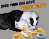 #dogs #feet #fritos #cornchips
